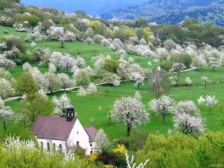 Berghauser Matten Kirschblüte